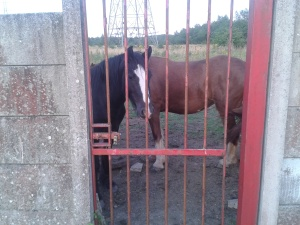 Horses watching the game at Atherton Town