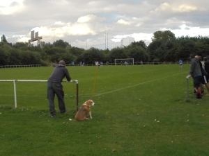 Dogs in attendance