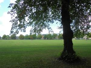 Hillsborough though the trees