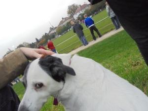 Maisie looks suitably unimpressed
